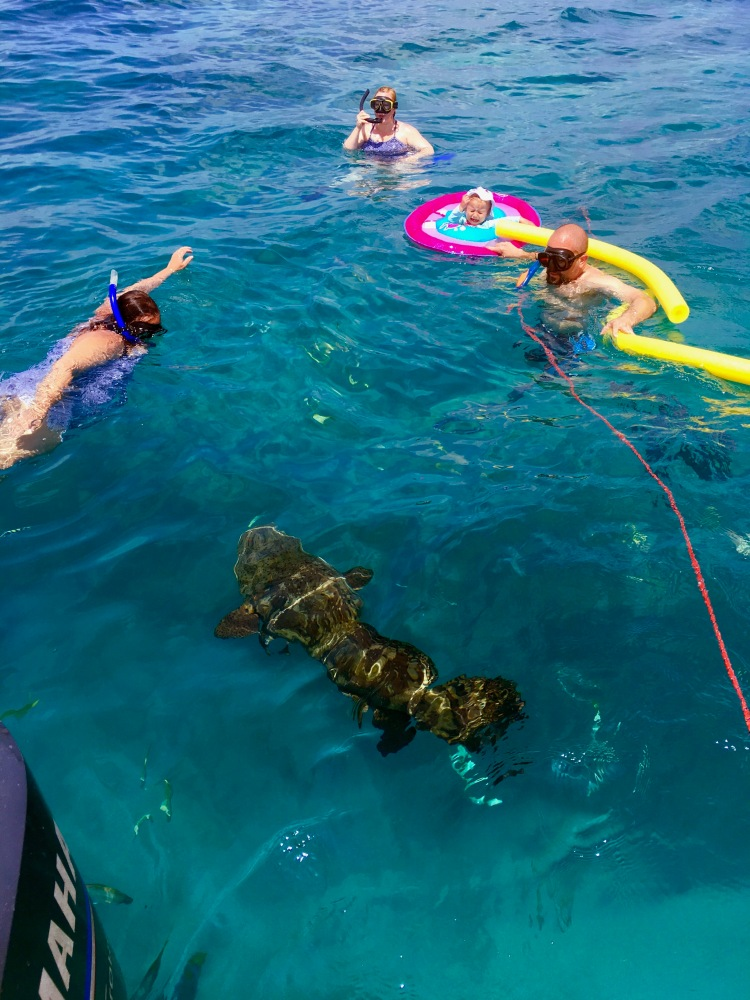Goliath grouper and family