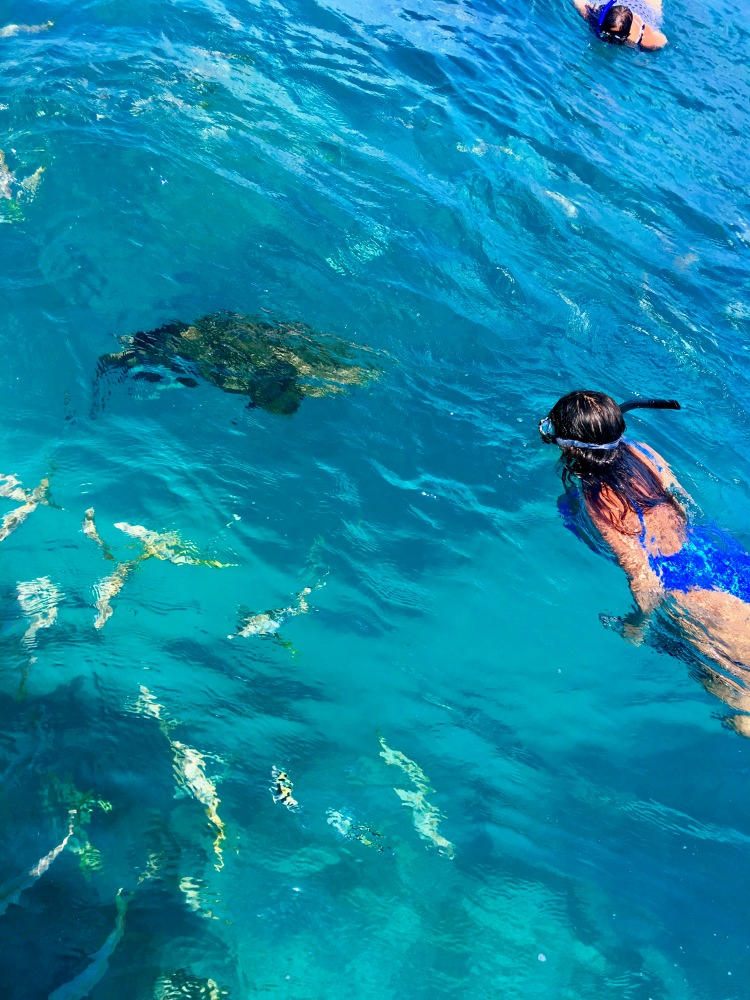 girl swimming with Goliath grouper fish
