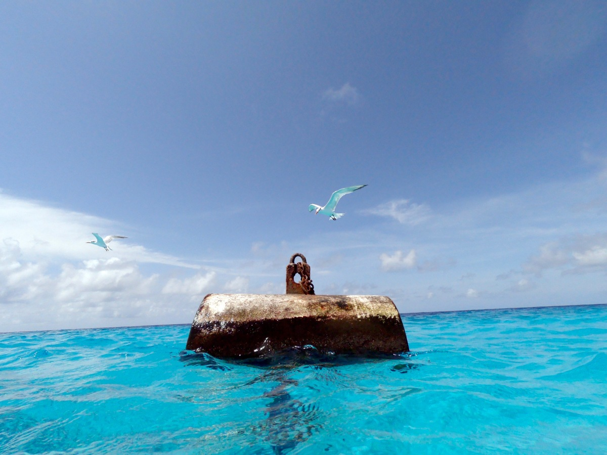 Sea bird landing on buoy