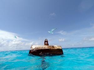 Sea bird landing on buoy