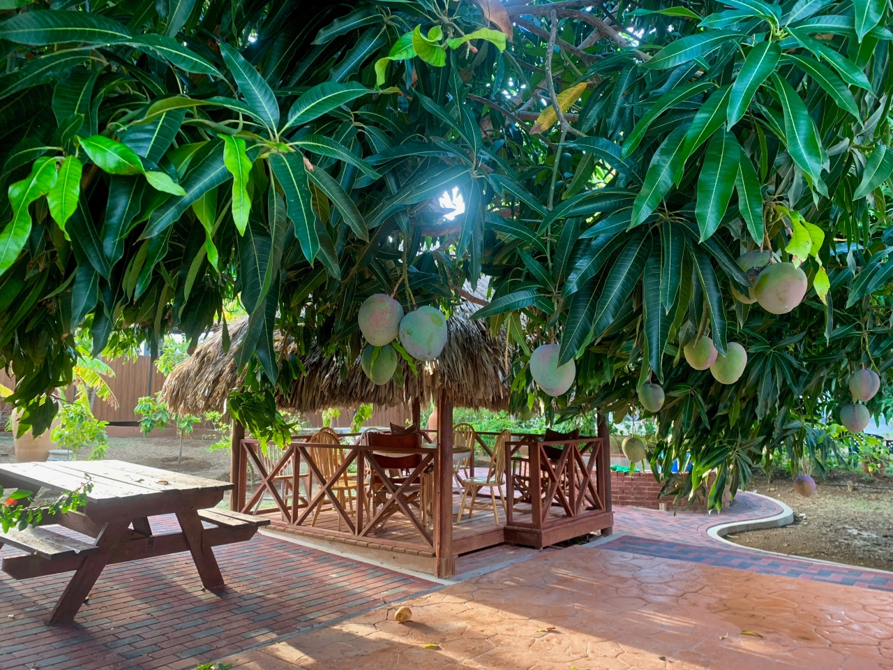 mango tree bungalow