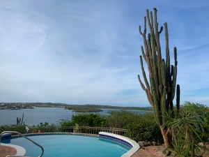 pool and cactus