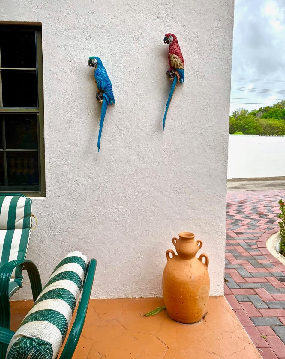 Parrot decor