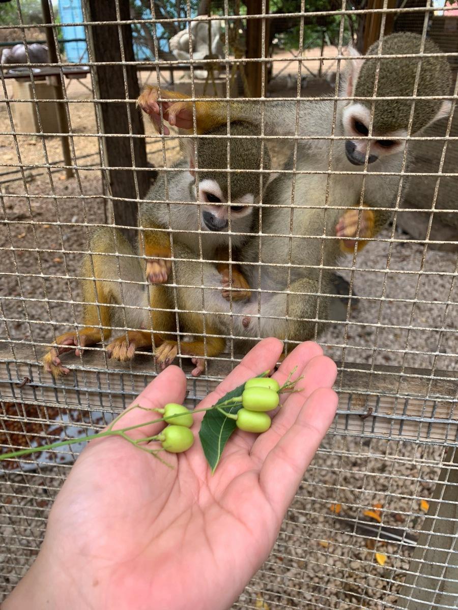 monkeys looking at food